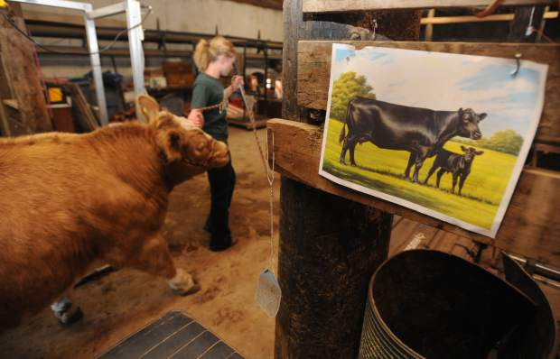 Roggen, Colo , girl goes from fear to attachment through decade of raising  cattle