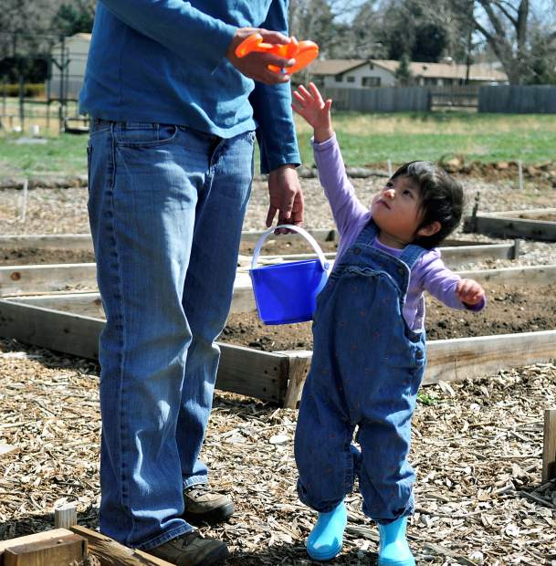 Yani Hata-Mickells, 21 months,  is just a little too short to reach her shovel and start her own work on the family garden on Tuesday at Ubuntu Garden in Greeley.