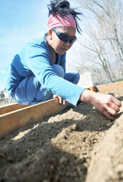 Darci Hata carefully places a few seeds as she works on her family's garden at the Ubuntu Community Gardens and Orchard behind Family of Christ Presbyterian, 2410 35th Ave., in Greeley. With Spring beginning many of Greeley's community gardens are opening for the growing season.