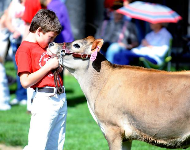 Kale Stegner, 10, leans in to kiss his cow, Dixie, on the nose before showing her Tuesday during the Colorado Dairy Youth Extravaganza at Island Grove Regional Park in Greeley. This is the 14th year for the event that hosted children from across Colorado. Participants from 4-H, FFA, and the Junior Breed Association members were welcome to compete in the event.