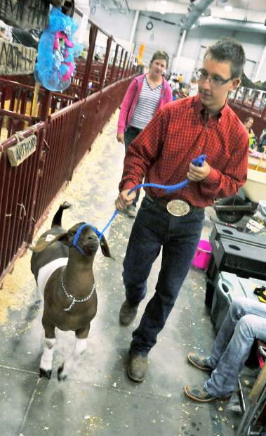 David Smith of Niwot walks his award-winning goat back to the pen after claiming the grand champion title at at the 2014 Weld County Fair in the Island Grove Events Center in Greeley. His goat disappeared after that win.