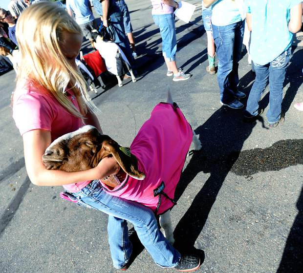 Cassidy Shea, 11, holds on to her goat as she waits in line to check her animals Tuesday morning at Island Grove Events Center in Greeley. One year after the prize-winning goat disappeared, many competitors are confidently returning with hopes that the disappearance was an isolated incident.
