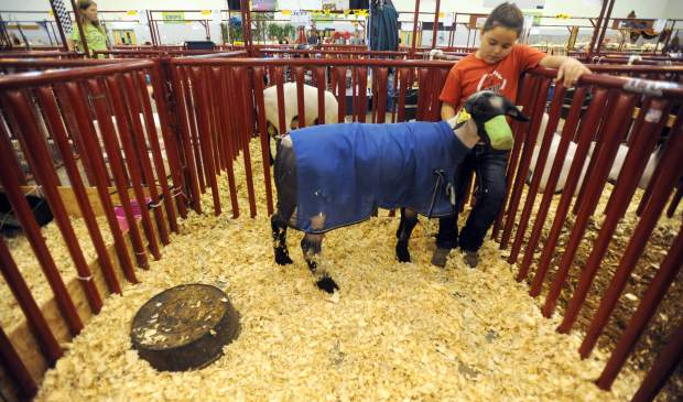 Gracie Blackston, 8, stands with her sheep as she feeds it during the Market Sheep event at the Weld County Fair on Thursday in the Island Grove Events Center in Greeley.