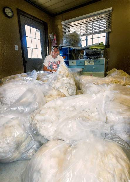 Chris Powers, owner of Sixth Day Farms West in Wellington, Colorado, shows off some of the bags of wool cut from his alpacas. Each large bag represents the yield from one alpaca. Powers has over one hundred and twenty-five animals and the wool will be sent to Yocom-McColl in Denver for individual grading.
