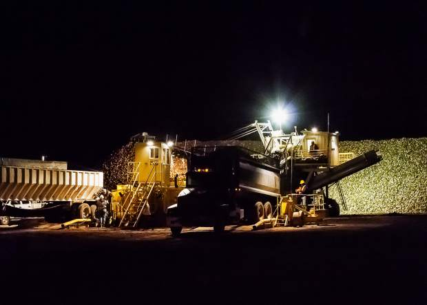 From the time that the Western Sugar piler opens at 4 a.m., there is a steady stream of trucks racing to get sugar beets from the fields to the pile before the cold weather closes the harvest. This drop-off point in Wellington, Colo., is one of 14 operated by the cooperative in Northern Colorado.