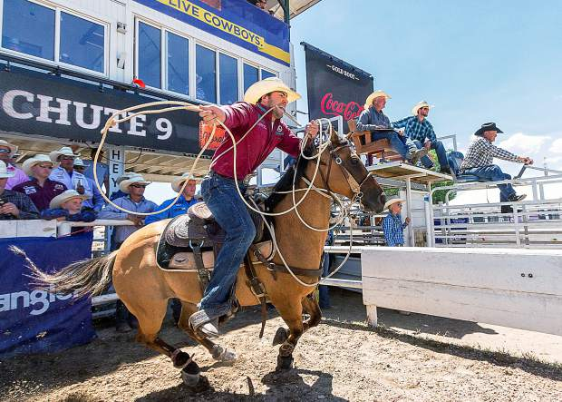 Historic Chute 9 is where all of the timed event action is. Tie Down Roper Morgan Grant of Canada leaves the box chasing his calf. In the background a Super Toe has moved the calf into position and above her the Chute Boss and his crew have set it all into motion.