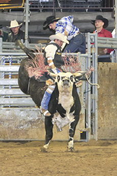 New Year S Eve Extreme Rodeo Fun At The Budweiser