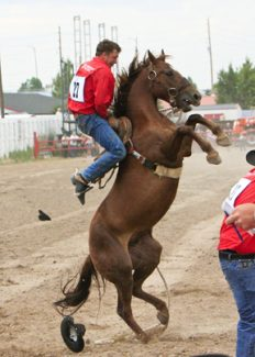 Tony BruguiereJust because you mount your horse, that does not mean you are going to stay there. These horses have never been ridden and do not take kindly to someone on their back.