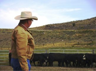 Matt BarnesGuy Glosson demonstrates the low-stress approach to a herd of cattle.