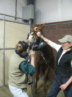 """Photos By Gayle SmithDr. Cory Reng examines """"Killian"""" at the Big Wyoming Horse Expo and floats the horse's teeth. Killian is owned by Barbara Chase of Casper, Wyo."""