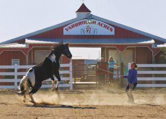 Tony BruguiereA trainer works with one of the Yarbrough Acres horses to use up some athletic energy prior to a riding lesson for a youngster. Ranch manager, Shelley Yarbrough, gives riding lessons in western and english.
