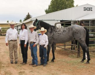 Tony BruguiereChip Merritt's father and Grandfather owned the foundation Quarter Horse  Blue Valentine until the horse died in 1980. Chip and Kathy Merritt and their sons Corey (L) and Brady with Fox Blue, one of their Merritt Quarter Horse reference sires.