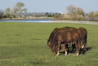 """""""Runoff from manure piles and horse paddock areas are rich with nutrients that can contaminate nearby lakes, streams, rivers, wetlands and drinking water supplies used for human and livestock consumption,"""" says Sean Scott, Colorado Department of Health and Environment's Environmental Agriculture Program Work Lead."""