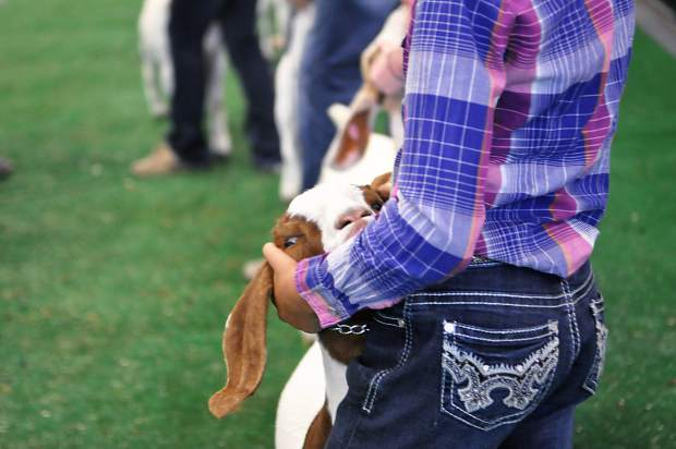 Shilo, a 7-month-old goat, nuzzles her owner, Karsyn Fetzer, during the Weld County Fair on Sunday.