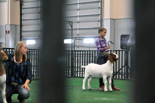 Karsyn Fetzer, 9, shows a goat as a favor during the Weld County Fair Boer Goat Show. She later will show her own goats, Hershey and Shilo, which each win fifth place in their divisions. Mary-Kate Newton / mnewton@greeleytribune.com