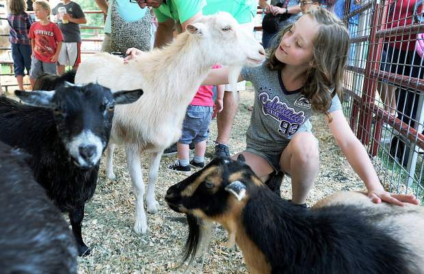 Alayna Hall, 10, gets up close and personal with one of the goats at the petting zoo featured at the Greeley Stampede on Wednesday in Island Grove Regional Park.