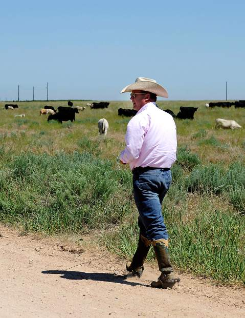 Art Gutterson looks over a group of cattle on his families land in eastern Weld County near Kersey. Gutterson has allowed oil and gas companies on their land and has created a good working relationship with them.