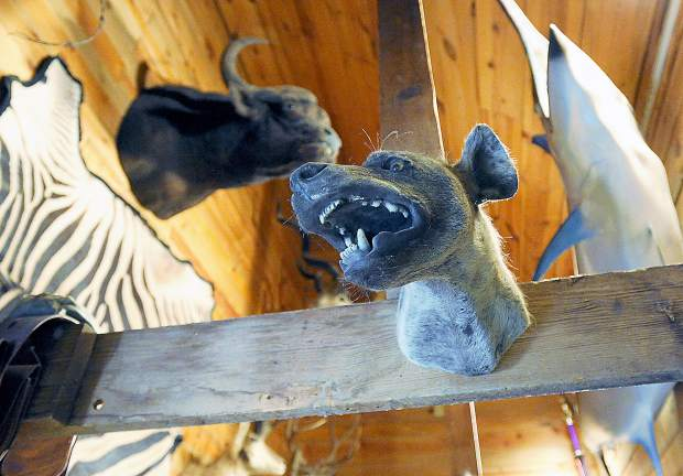 Trophies from a African safari hang inside the tack room on the Guttersen family ranch.