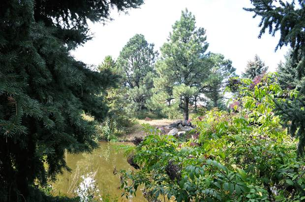 A pond rests behind native trees at Houston Gardens. The district hopes to one day be able to import fish and other native wildlife to live in the garden.