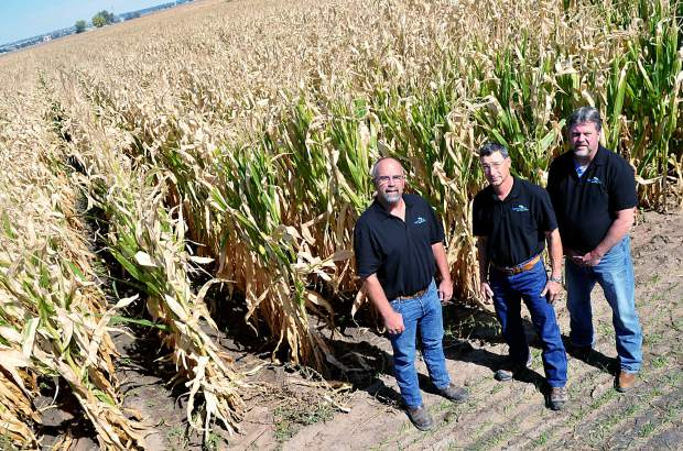 A test plot of corn stretches out behind Green Earth (founders) Bruce Sandau, left, Mike Sever, middle, and Jim Daulton, outside of Milliken.