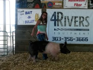 Payton Bellm raised a Hampshire Cross Hog in Brighton that weighed in at 217 pounds. Payton and her family decided to sell a hog at the South East Weld County Fair Saturday and donated all of the proceeds to the Kilker family.