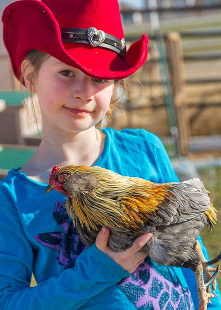 Seven-year-old, Jessie Laffey and her Clean Legged Bantam chicken. Jessie and her chicken won a first place ribbon at the 2012 Larimer County Fair.