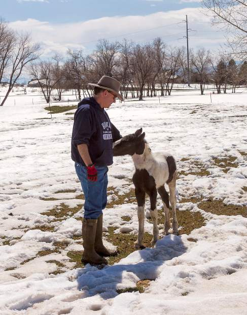 Stephen Laffey and Laffey's Triumph. The Gypsy Vanner colt by Bees Knees and out of Maddie is the latest addition to Laffey's Irish Animals in Fort Collins, Colo.