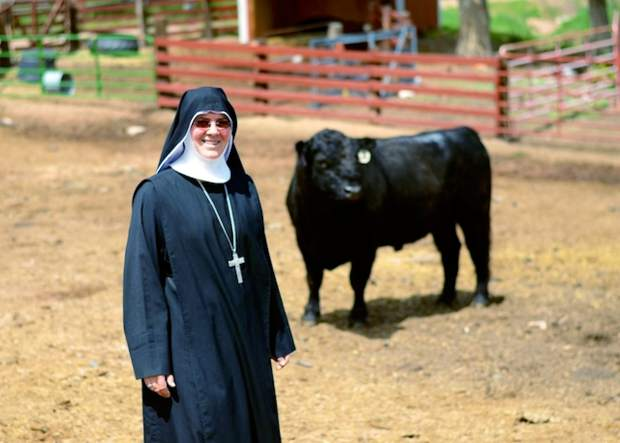 Abbess Mother Maria-Michael in the main corral with Pops the bull.