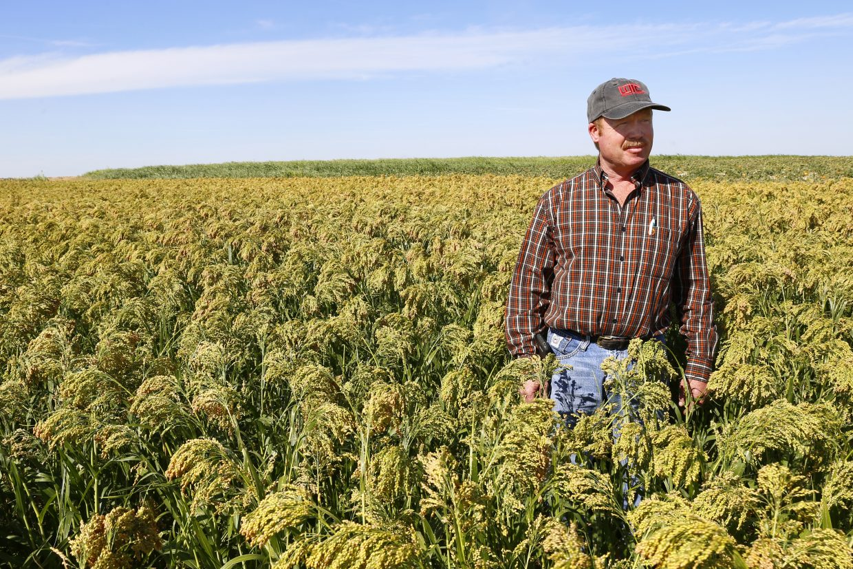 Jerry Cooksey stands in a field of millet, when Cooksey started in the business in the early '90s the ag market was low, such as it is now.