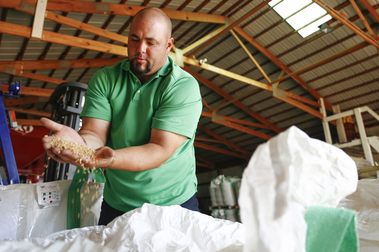 Jeremy Helzer, seed accociate at Marc Arnucsh Farms in Keenesburg, shows the farm's certified wheat seed. The wheat seed is profitable for their farm and farms around them because it offers a good product to start from.
