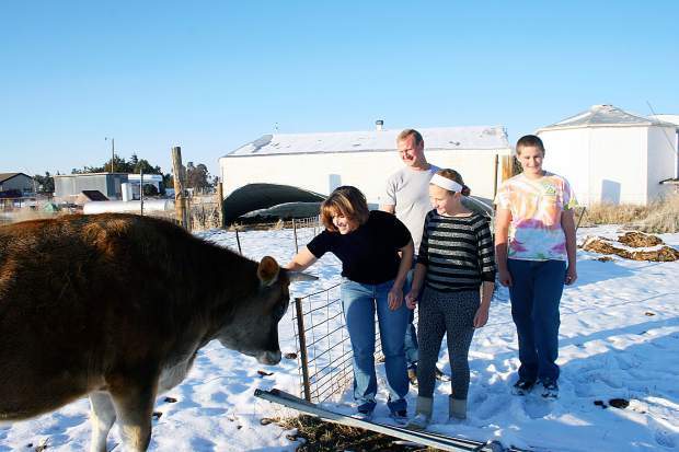 The Franke family stops to greet and pet their cow, Pepe, while showing off their property and hog farm Tuesday near Roggen. Three generations of the Weld County farm family were chosen to receive the 2015 Rocky Mountain Farmer's Union's Farm Family of the Year Award. Pictured from left, Carolyn Fanke, Chad Franke, Brooke Franke, 11, and Tim Franke, 14.