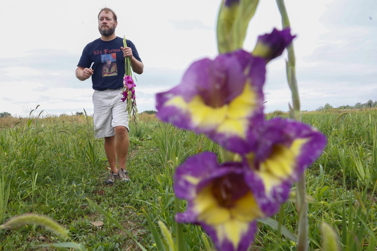 Matt Carson, owner of 934 Farms, north of Milliken, cuts flowers from his gladiolus field six days a week.