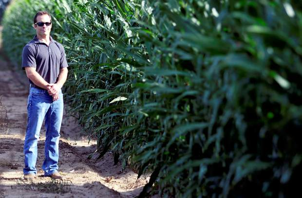 Darren Hankins stands at the entrance to the corn maze he cut into his field on Tuesday outside Johnstown.