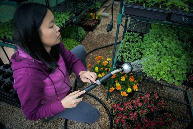 Hanmei Hoffman waters plants inside her greenhouse on Friday morning in Greeley. Hoffman grew up farming in rural China and has learned the farming techniques to succeed in Colorado.