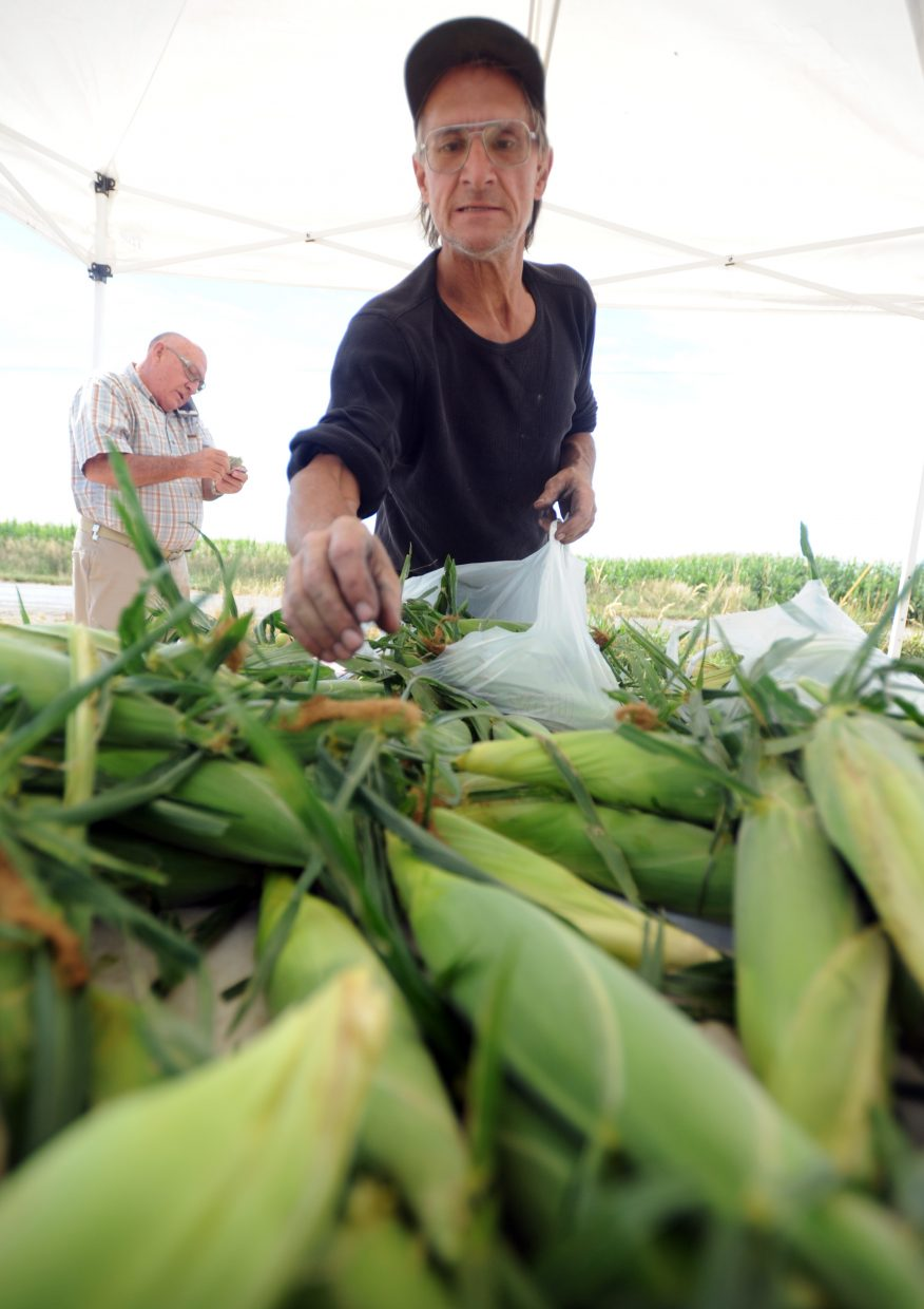Jeff Bower carefully picks out a few ears of corn while stopping at the Leffler's stand along Weld County Road 74 west of Eaton.