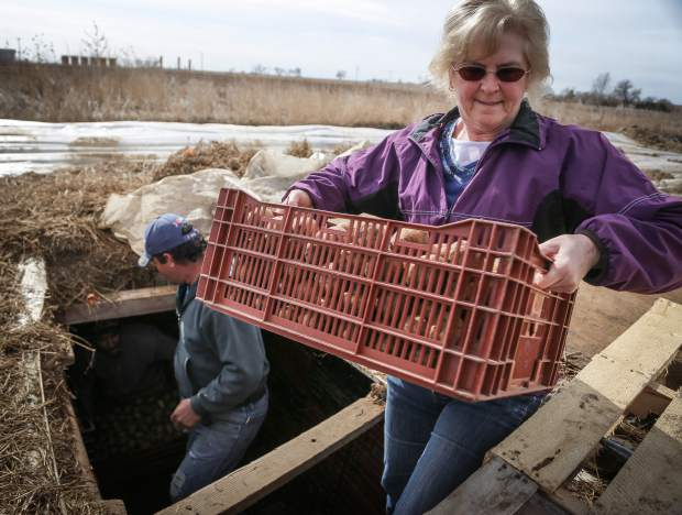 Jacquie Monroe lifts a crate of potatoes out of a cellar at Monroe Organic Farms on Monday in Kersey.