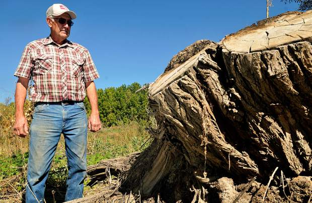 Gene Kammerzell stands along side one of the stumps that remains after Suncor removed trees on their property outside of Milliken. This tree was one of the naturally growing trees that removed, Gene estimated it to be around 100 years old.