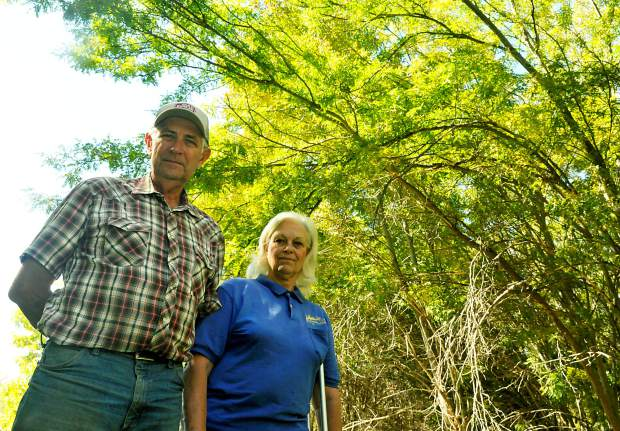 The canopy of several nursery grown trees stretch out above Gene and Jan Kammerzell  in Arborland Nursery outside Milliken. According to Kammerzell, Suncor had originally planned to remove sections of the canopy as well.