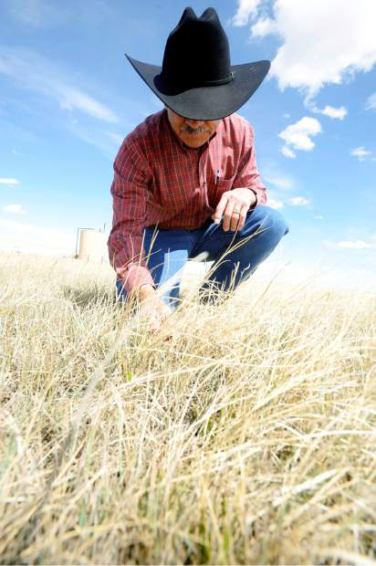 Don Hijar, founder of Pawnee Buttes Seed, sifts through some of the grass at one of the sites near Kersey that had irrigation water diverted to Latham Reservoir. Hijar and Pawnee Buttes revegetated the site with native grasses that are drought resistant.