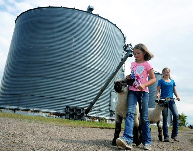 Sydnee Lauridson, 8, and Macey Lauridson, 13, walk their lambs around their farm in Brighton earlier this year.