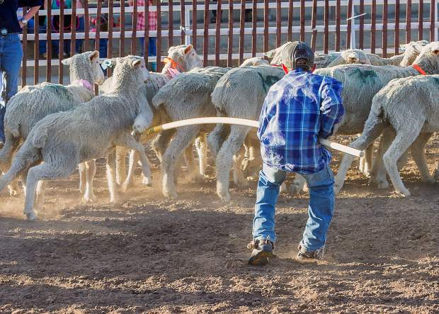 Donny Joe Quick, who competed in the mini-bronc riding at the Wild West Weekend in Craig, Colo., decided to try his hand at sheep hooking. At the other end of that long pole is a sheep that weighs far more than Donny Joe.