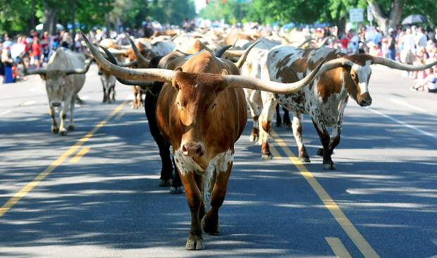 Longhorns from the Greeley Stampede march down 10th Avenue during the Greeley Independence Parade two years ago.
