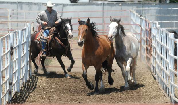 Rhett Beutler, co-owner Beutler and Son Rodeo Co., chases a few of the horses to a nearby trailer as he prepares for Tuesday night's rodeo at the Greeley Stampede Arena. Rhett and his father Bennie run the stock contracting business together.