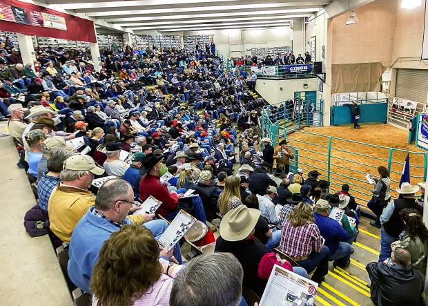 There is a lot of entertainment at the NWSS, but out in The Yards it is all business. Buyers and sellers fill the large sales arena. From Herefords to Yaks, there is always a packed sales arena of buyers.