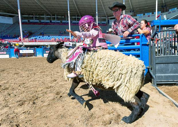 Six-year-old Destini Alarcon from Fort Lupton, Colo., charges out of the chutes in the competitive mutton busting division of the Kids Rodeo during the Greeley Stampede. This young girl is already a champion, having just won the mutton busting at the Sundance Steak House in Fort Collins, and is heading to Fort Worth for the world championships.