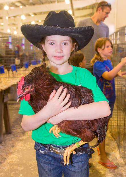 Seven-year-old Jessica Laffey holds her sister Sarah's second-place Rhode Island Red chicken at the 2013 Larimer County Fair. Jessica is not quite old enough to show chickens yet.