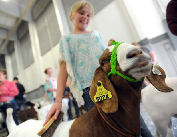 Randi Jo Owens, 10, smiles as she brushes her goat, which took the reserve champion heavyweight title earlier in the Weld County Fair, during the Junior Livestock Sale in early August at the Island Grove Events Center in Greeley.