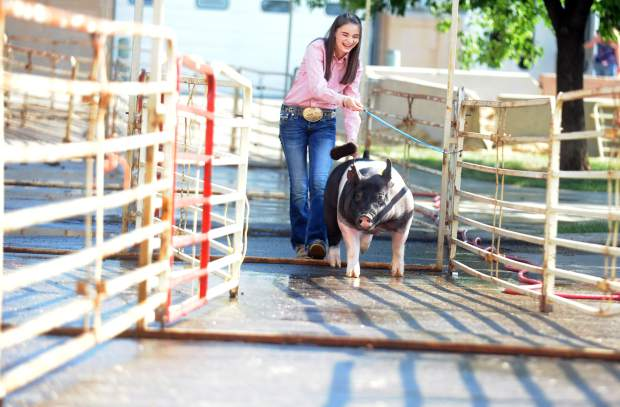 Kylie Kayser, 13, smiles as she walks her pig away from the auction area in early August during the Weld County Fair Junior Livestock ale at Island Grove Events Center in Greeley. Kayser was among the hundreds of kids showing and selling their animals.