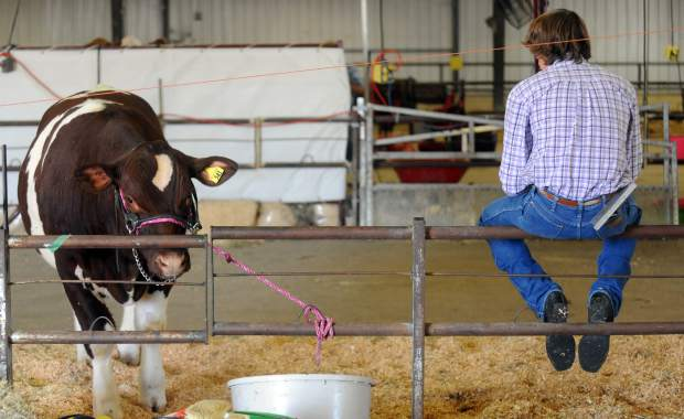 Jaydee Johnstown sits on fence waiting to sell in the beef auction during the Weld County Fair junior live stock sale in early August at the Island Grove Events Center in Greeley.
