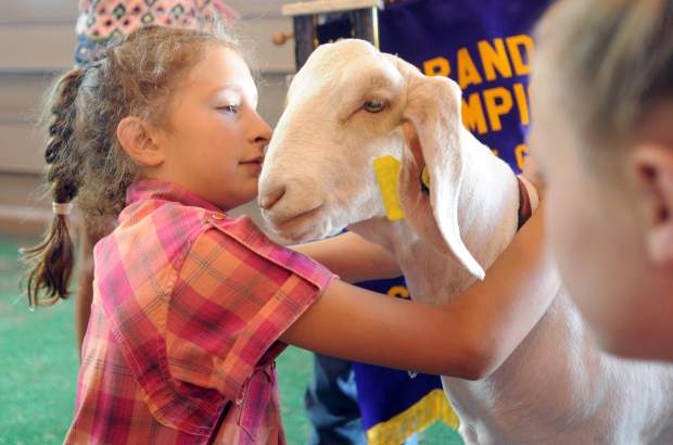 Rylee Anderson, 9, holds onto her goat during the Weld County Fair Junior Livestock Sale in early August at the Island Grove Events Center in Greeley.
